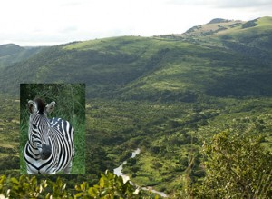 Hluhluwe-Imfolozi National Park