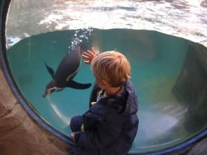 Cornish Seal Sanctuary, Gweek