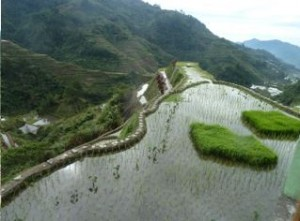 Rice terraces, Luzon, Philippines