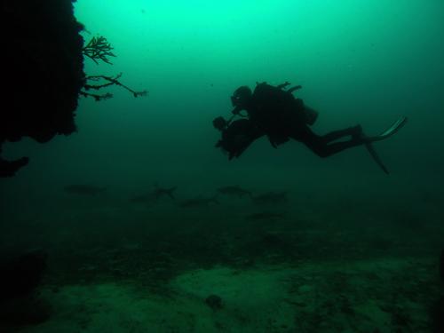 Diver at Xcalac