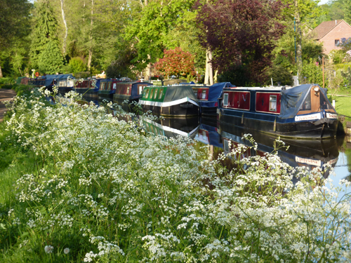 Canal boats on the Wey