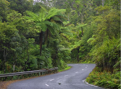 Kauri Coast road, New Zealand