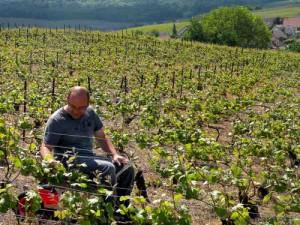 Vineyards champagne France