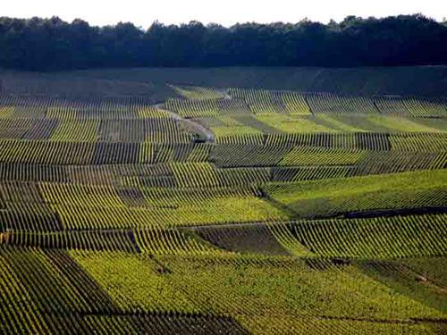 Mancy vineyards