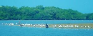 030315El Refugio Seabirds (640x253) (3)