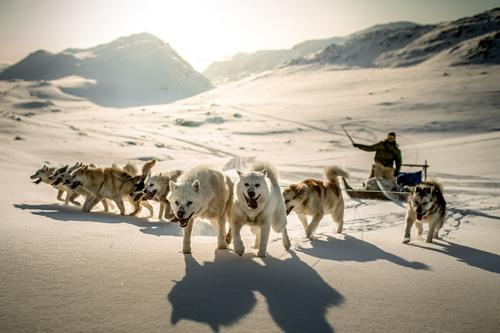 Dog sledding pics