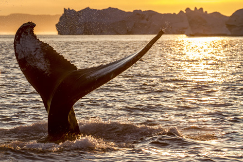 Whale tail, Greenland