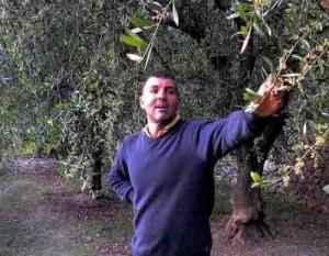 050515Finale Ligure-Domenico Ruffino in his olive grove above Varigotti lowres (3)