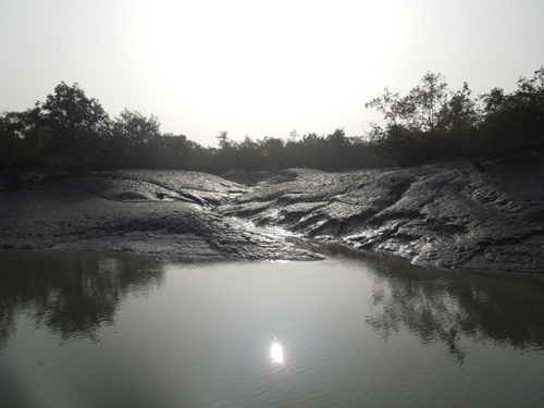 Mud, mud and more nud in the sunderbans
