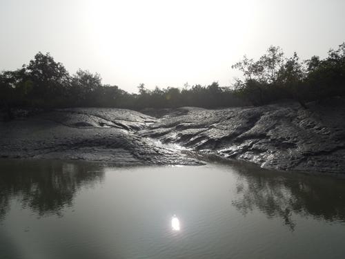 Mud, mud and more nud in the sunderbans