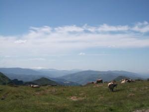 Spanish rural landscape