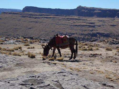 Grazing horse, Simien Mountains, Ethiopia
