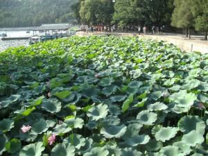 051015Beijing Flowers (3)