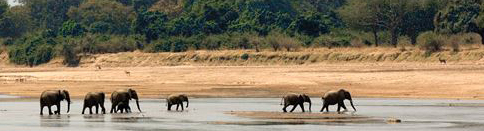 081015elephants in the Luangwa