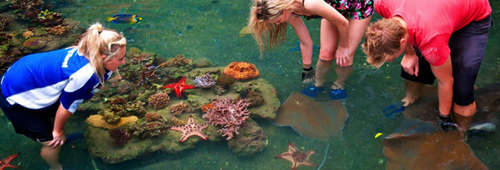The Living Reef on Daydream Island Photo Credit: DaydreamIsland.com