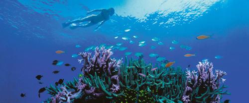 Snorkelling off Hayman Island