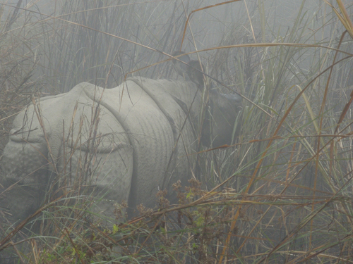 Rhino sighting, Chitwan, Nepal