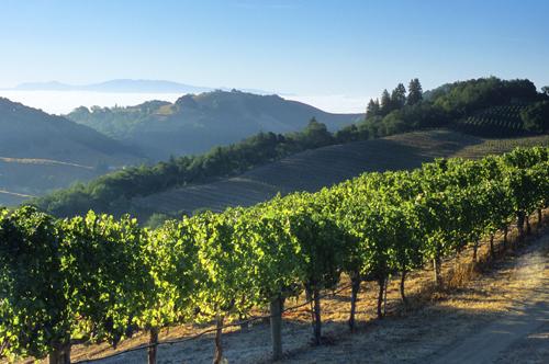 Napa Valley vinyards