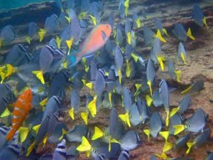 Snorkelling, Galapagos