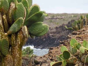 Cactus, Galaagos islands