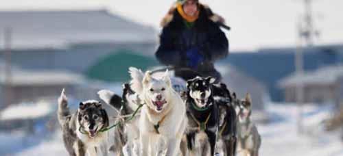 Itarod dog-sled