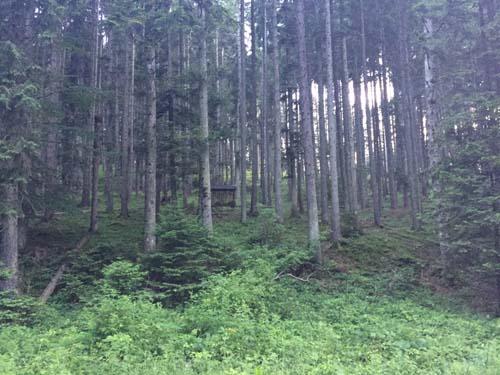 Bear hide, transylvania