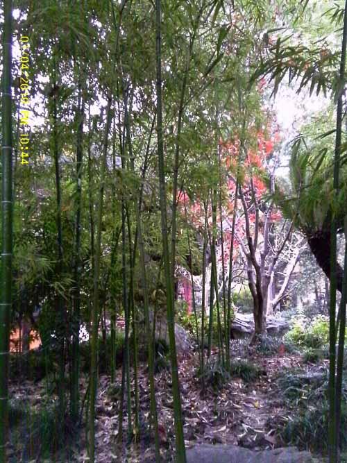 Woodland, China