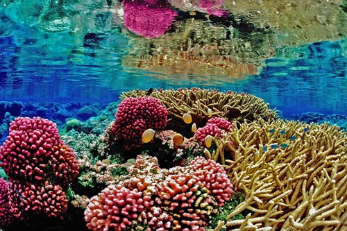 Underwater Recife