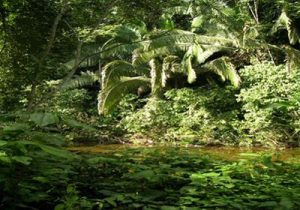 Belize rainforest