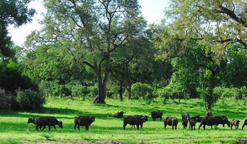 Green season Zambia