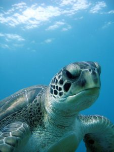 Turtles don't need passports