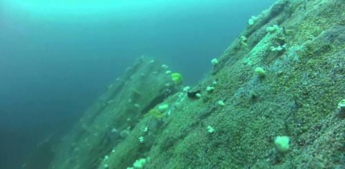 Eddystone Reef