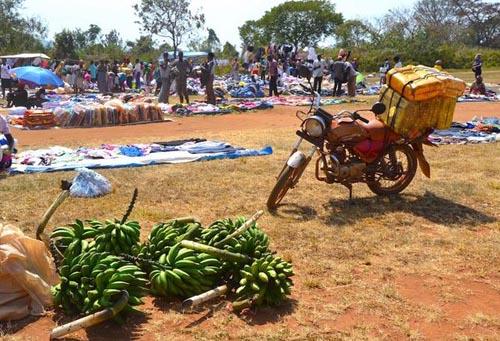 Ugandan bananas for sale