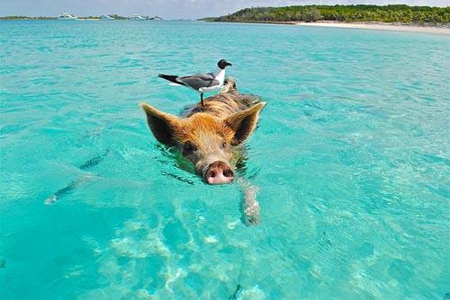 Bahamas pic
