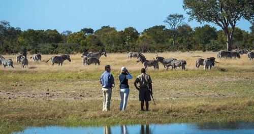 Safari Zimbabwe